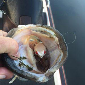 Lake Fork Fishing